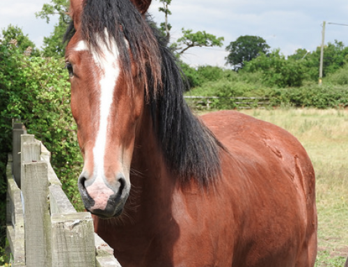 Contribution and Apportionment: Unruly Horses?  An article by Charles Feeny and Sam Irving for PI Brief Update Law Journal